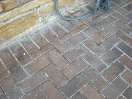 What Happens When Amateurs Seal Brick Pavers-5