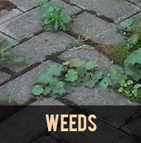 paver protector weed