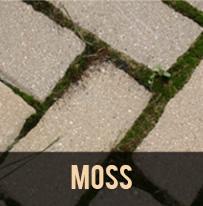 paver protector moss